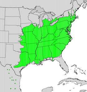 Platanus occidentalis map.png
