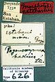 Pogonomyrmex californicus castype00626 label 1.jpg