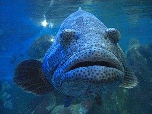 Poisson aquarium vietnam.jpg