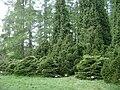 Poland. Warsaw. Powsin. Botanical Garden 032.jpg