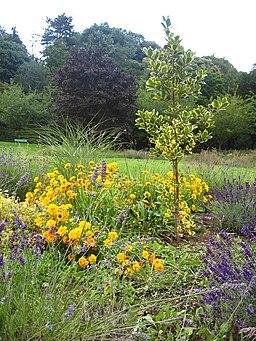 Pontypool Park Colours - geograph.org.uk - 2110515