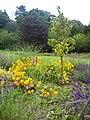 Pontypool Park Colours - geograph.org.uk - 2110515.jpg