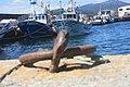 Porto do Son Galicia FV.jpg