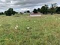Poulets Bresse Baraque Pré Route Deschamps St Cyr Menthon 1.jpg