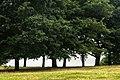Primrose Hill - panoramio (1).jpg