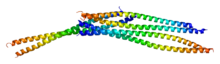 Protein VIM PDB 1gk4.png