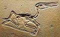 Pterodactylus kochi 2.jpg