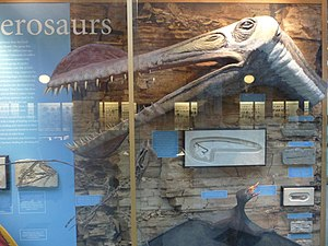 Walking with Dinosaurs - Tropeognathus puppet head that was used in Walking with Dinosaurs at the Oxford University Museum of Natural History