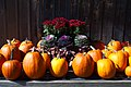 Pumpkin Display (5337360846).jpg