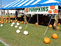 Pumpkin Patch on N Patterson St, Valdosta, 2015.JPG