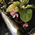 Purple belly flower.jpg