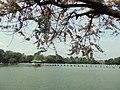 Pyinmana, Myanmar (Burma) - panoramio (2).jpg