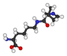 Image illustrative de l'article Pyrrolysine