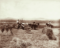Queensland State Archives 3987 Reaper binder and stooks at Green Hills Farm near Warwick 16 November 1894.png