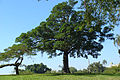 Quinta da Boa Vista 05.jpg