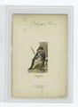 Régiment royal liégeois. 1788 (NYPL b14896507-85193).tiff