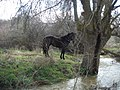 Río Blasco 2.JPG