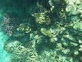 Rafa koralowa Hurgada(13).JPG
