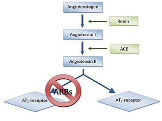 Discovery and development of angiotensin receptor blockers - Fig 2. Renin angiotensin pathway