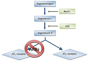 Image result for block binding of angiotensin II to type 1 angiotensin (AT1) receptors.
