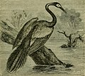 Reptiles and birds - a popular account of their various orders, with a description of the habits and economy of the most interesting (1883) (14749191761).jpg