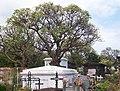 Reunion Saint-LeuGraveyard Plumeria alba 02.JPG