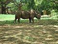 Rhinoce27.jpg