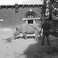Rhinoceros in Artis, Bestanddeelnr 910-6391.jpg