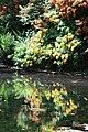 Rhododendronpark Bremen 20090513 086.JPG