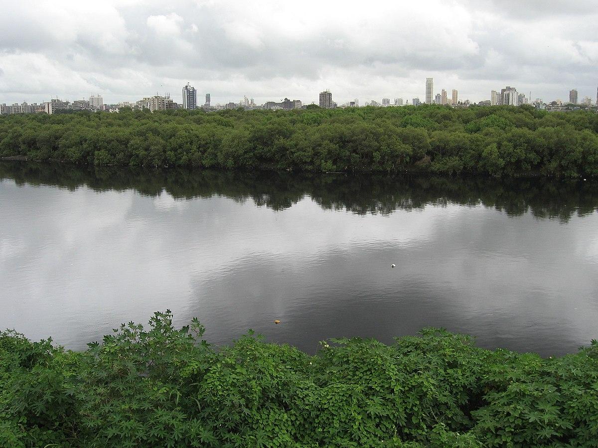 River: Mithi River