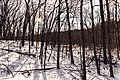 Riverview Trail, William O'Brien State Park - Winter in Minnesota (27514527949).jpg