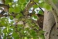 Robin's nest, Mammoth Hot Springs (44e26a79-62cb-468a-a5e7-cfbd8d07f1ab).jpg