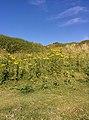 Rock-cornwall-england-tobefree-20150715-165550.jpg