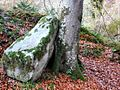 Rock and tree in Ness Woods - geograph.org.uk - 637200.jpg