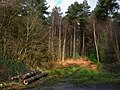 Rogate Common - geograph.org.uk - 1136083.jpg