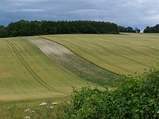 Rolling fields and woodland high above the Test Valley - geograph.org.uk - 489044.jpg