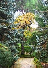Real Jardín Botánico De Madrid Wikipedia