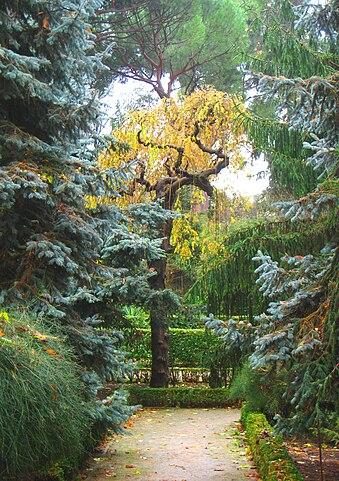 Real Jardín Botánico De Madrid Wikiwand