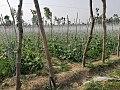 Rural beauty of Pakistan.jpg
