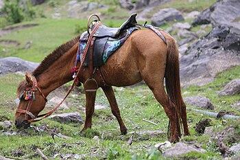 Saddled hourse grazing - Horsepower.jpg