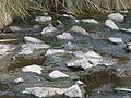 Salt Creek near mouth.JPG