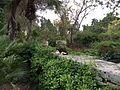 San Anton Attard Gardens 09.jpg