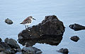 Sandpiper, Bodega Bay.jpg