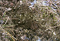 Satzer Moor Kalkboden.jpg