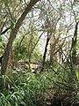 Savane Biosphère 2.JPG