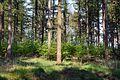 Schleswig-Holstein, Looft, FFH-Gebiet Moore bei Christinenthal NIK 6515.jpg