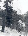 Schooner Head Cliffs (37b3f40bc00149f7a2fe01909455805f).jpg