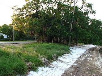 Ballast Point (Tampa) - Shoreline on Hillsborough Bay at Ballast Point Neighborhood