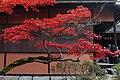 Shugakuin villa (4194487138).jpg