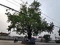 Sinamangal Shivalinga.jpg